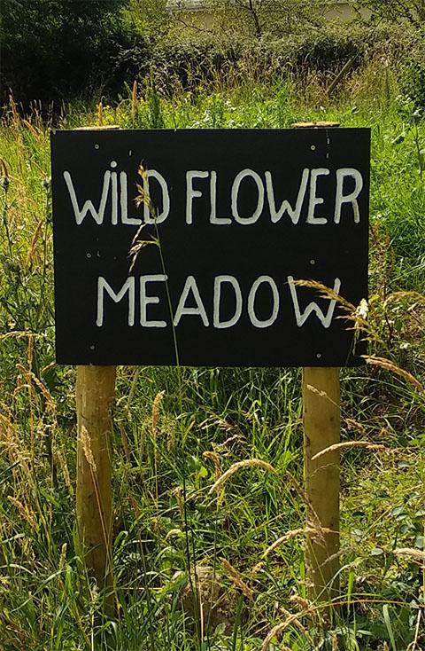 Newcastle Flower Meadow