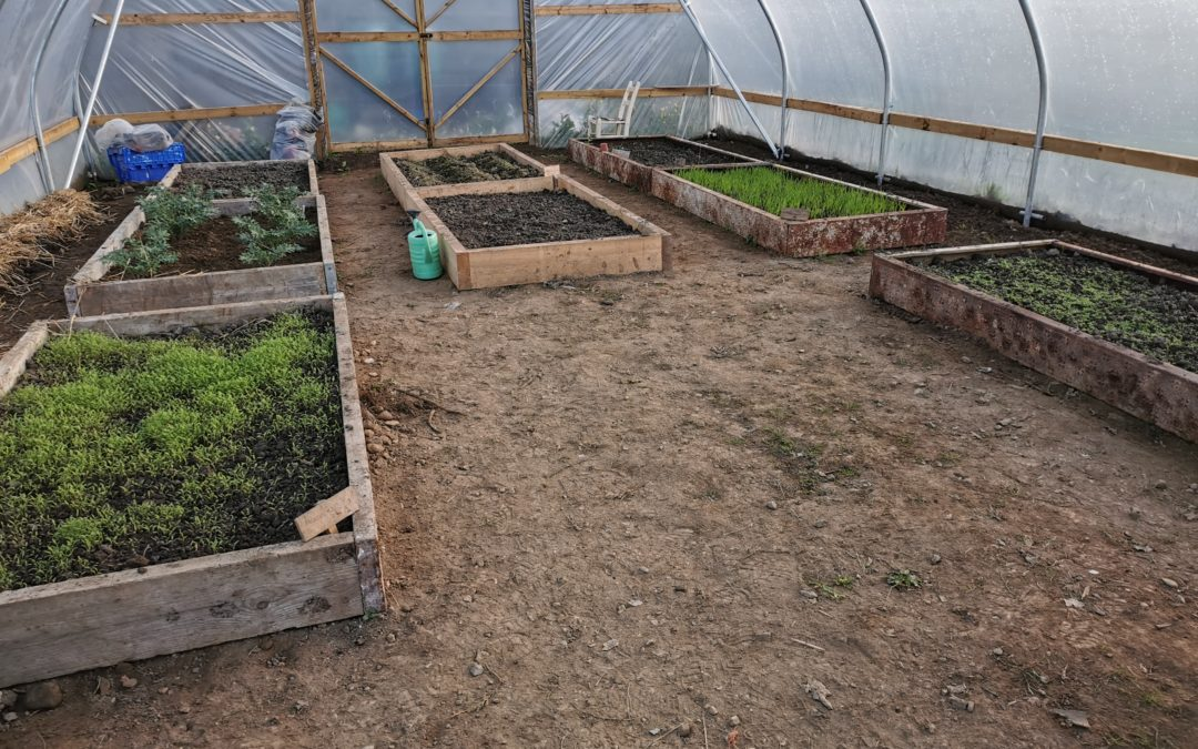 Newcastle Community Composting – Poly Tunnel up and running.